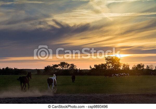 Caballos de sol corriendo - csp9893496