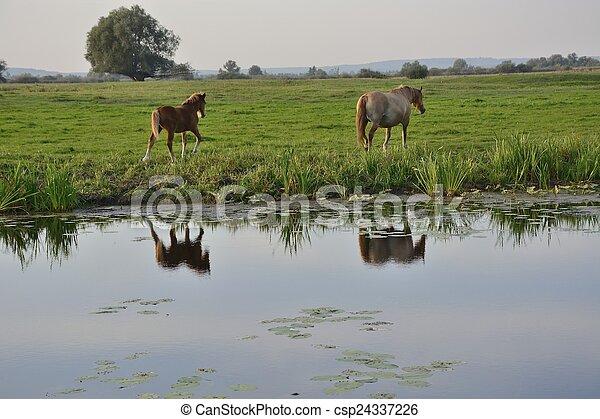 caballos - csp24337226