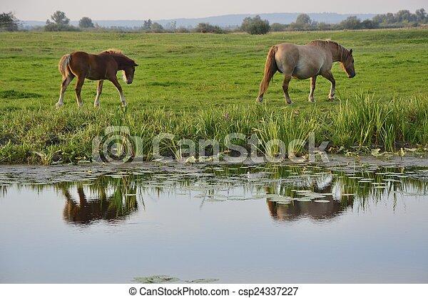 caballos - csp24337227
