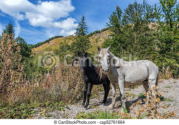 Dos caballos salvajes en las montañas de Montenegro - csp52761664