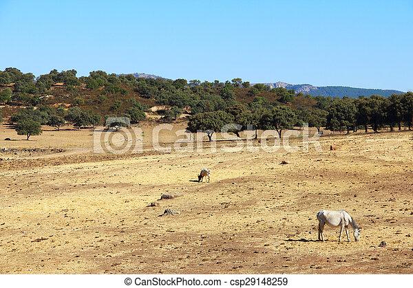 caballos, pasto, andalusian - csp29148259