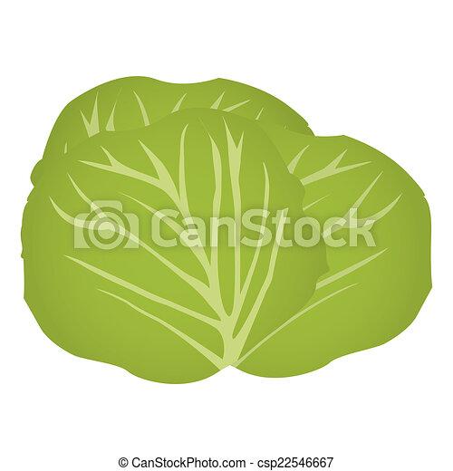 Cabbage - csp22546667