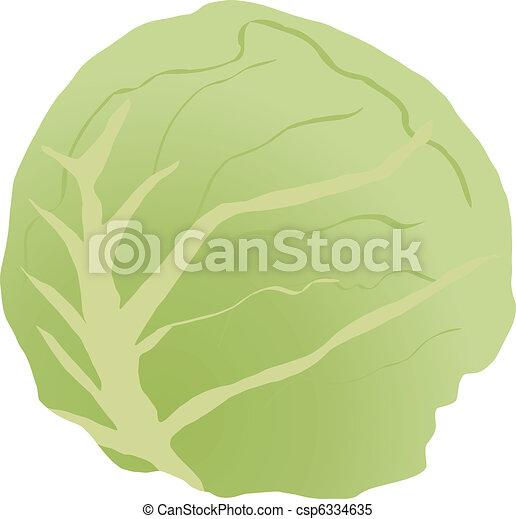 Cabbage  - csp6334635