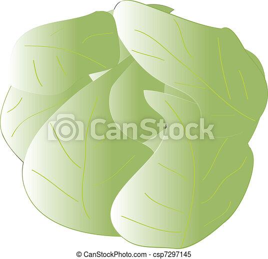 cabbage - csp7297145