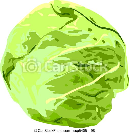 Cabbage - csp54051198