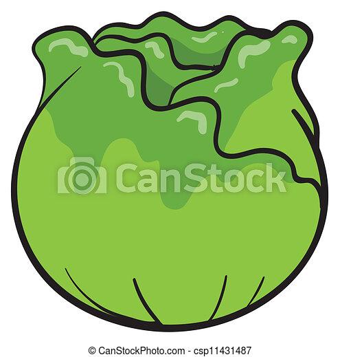Cabbage  - csp11431487