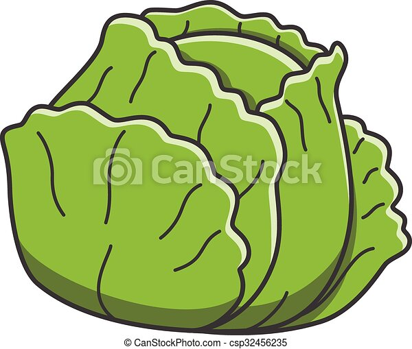 Cabbage - csp32456235