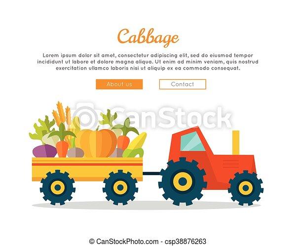 Cabbage Farm Web Vector Banner in Flat Design. - csp38876263