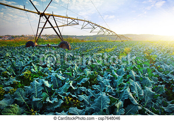 Cabbage Growth - csp7648046