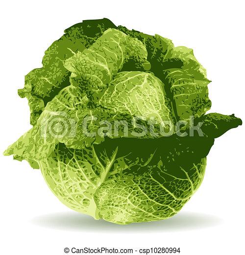 cabbage illustration - csp10280994
