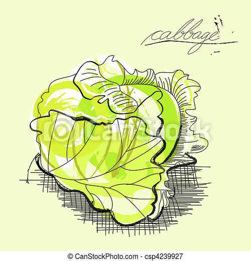 Cabbage  - csp4239927