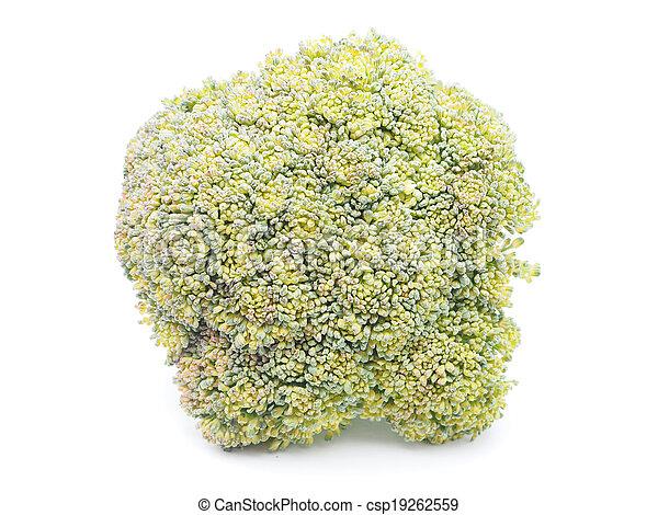 cabbage on white background - csp19262559