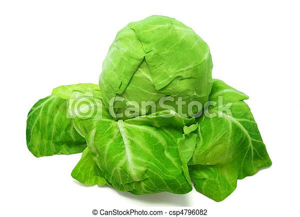 Cabbage on white background - csp4796082