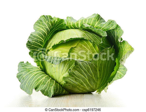 Cabbage - csp6197246