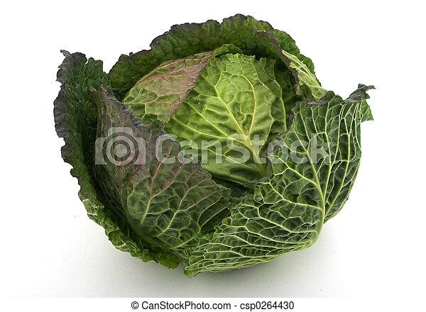 Cabbage - csp0264430