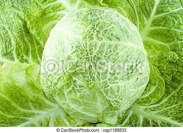 Cabbage - csp1188833