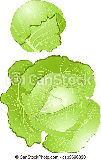 cabbage - csp3696330