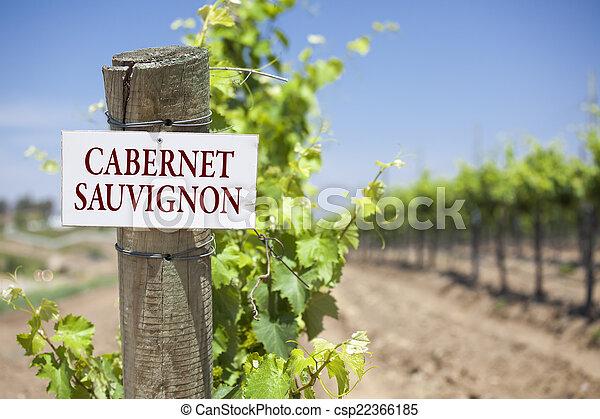 Cabernet Sauvignon Sign On Vineyard Post - csp22366185