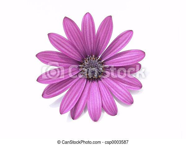 cabeza, flor - csp0003587