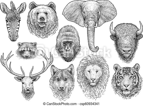 Ilustración de colectas de animales, dibujo, grabado, tinta, arte de línea, vector - csp60934341