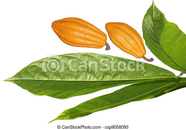 cacao, boon, blad - csp9058093