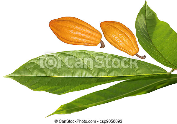 Frijoles de coco y hoja - csp9058093