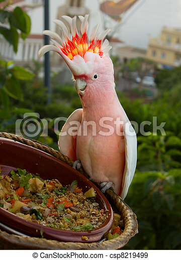 cacatau parrot - csp8219499