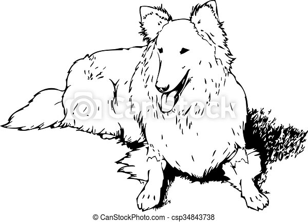cachorro collie - csp34843738