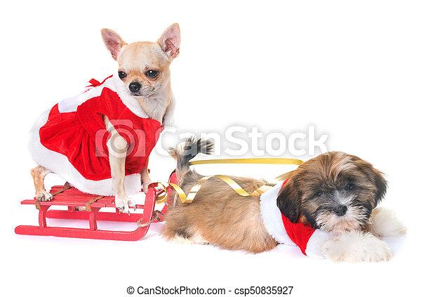 Cachorros Natal Cachorros Decoração Fundo Frente