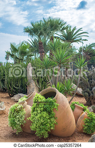 Cacti and palm trees in the garden. - csp25357264