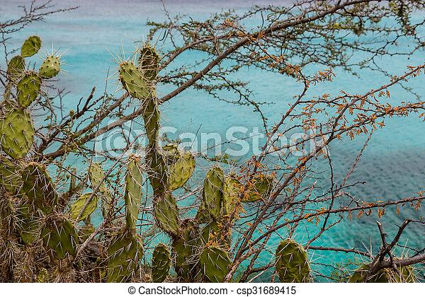 Cactus con océano de fondo - csp31689415