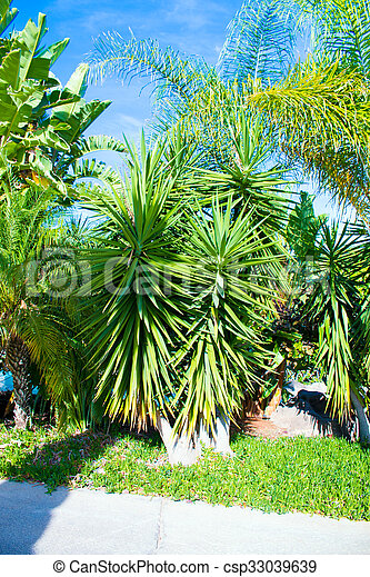 cactus and palm tree leaves - csp33039639