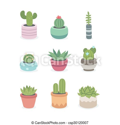 Cactus and succulent plants in pots - csp30120007