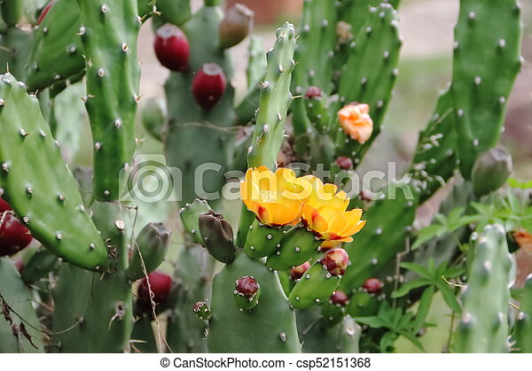 Cactus And Succulents With Yellow Flowers In Spring
