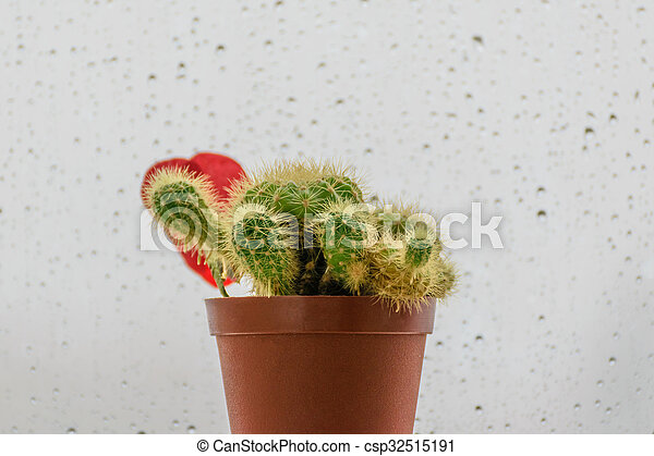 Cactus and water drops - csp32515191