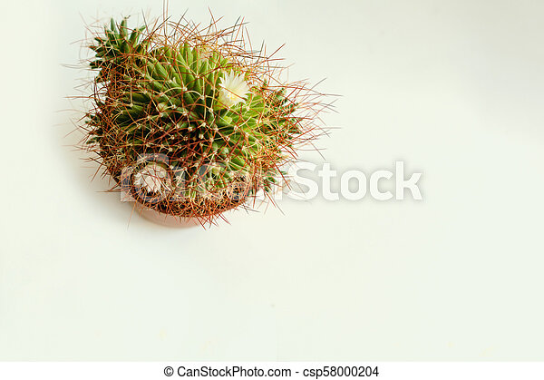 cactus closeup on background top view from above - csp58000204