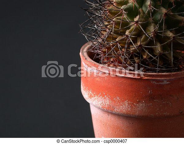 Cactus Closeup - csp0000407