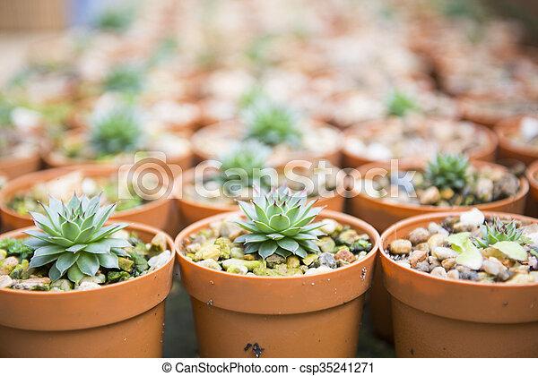 cactus plant for garden decoration - csp35241271