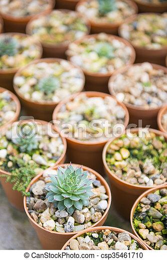 cactus plant for garden decoration - csp35461710
