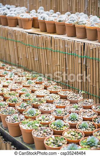 cactus plant for garden decoration - csp35248484