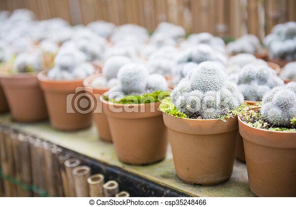 cactus plant for garden decoration - csp35248466