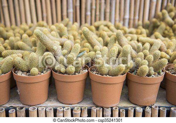 cactus plant for garden decoration - csp35241301