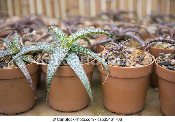 cactus plant for garden decoration - csp35461706