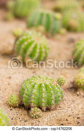 Cactus, shallow depth of field. - csp14762206