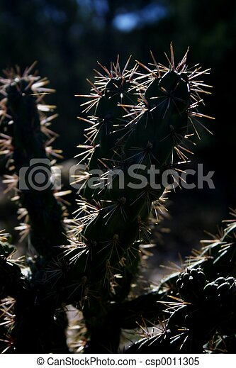 Cactus Spines - csp0011305