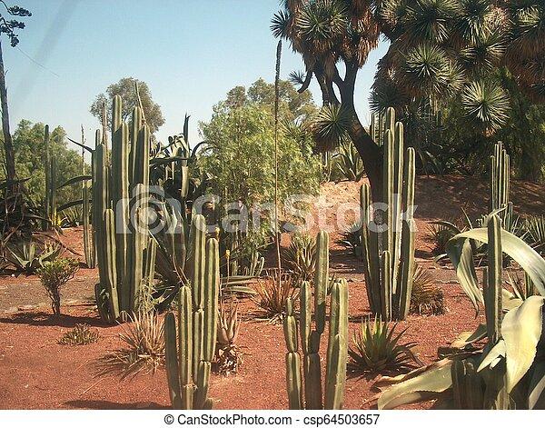 cactus - csp64503657