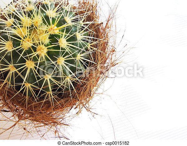 cactus - csp0015182