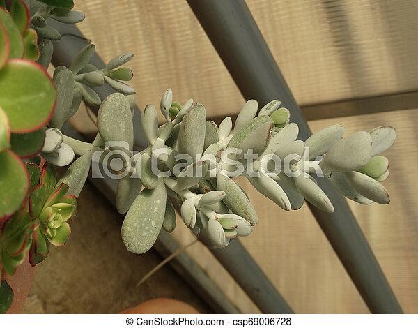 Cactus - csp69006728