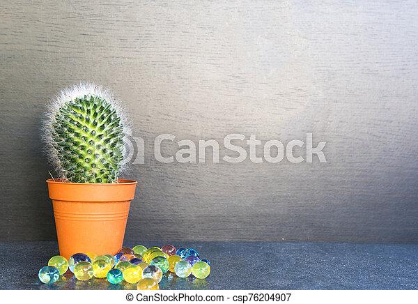 Cactus - csp76204907