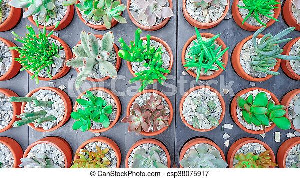 Cactus succulent Plant Potted - csp38075917
